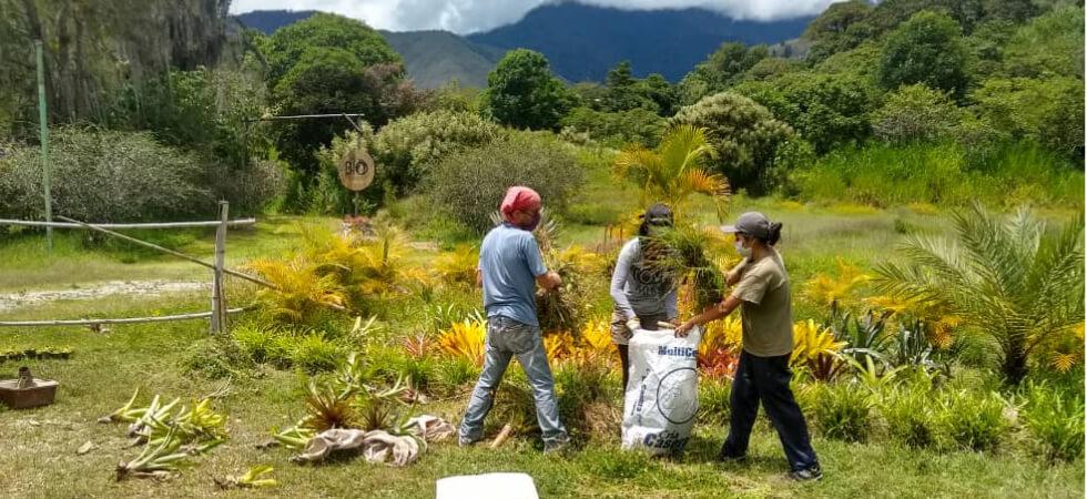 Maxime und Carimar stehen mit einer dritten Person auf einer grünen Fläche und sammeln Blätter. Im Hintergrund sind Berge zu sehen.